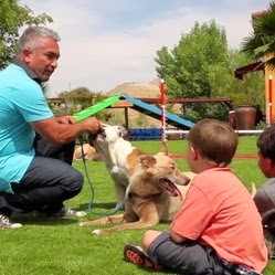 el encantador de perros promueve el uso de césped artificial para perros