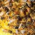 Radialista morre atacado por abelhas em Brejo Santo, no Ceará