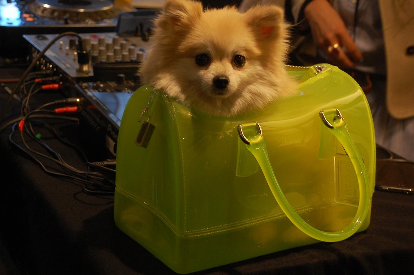 Soaljawab Hukum Corak Anjing Pada Beg Ohsem Meh