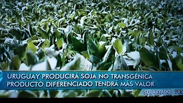 ecoapicultores transgénicos miel sin glifosato