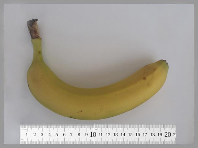 medir la longitud del pene