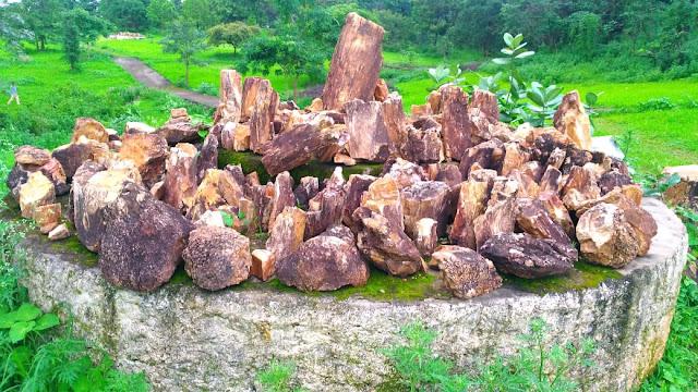 Ghughwa fossils and park dindori, ghughva rahtriy jivasm udhyan dindori mp
