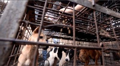 Ini 3 Kota Di Indonesia Yang Menjadi Sorotan Dunia Karena Konsumsi Daging Anjing