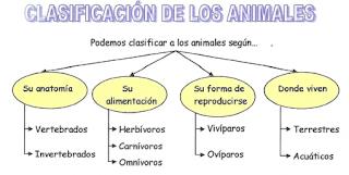 ¿Como se clasifican los Animales?