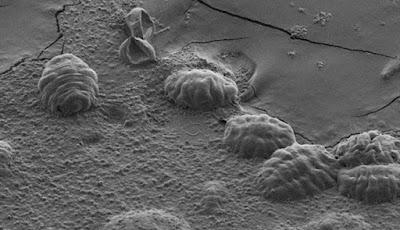 Kunci Kekuatan Super Tardigrade Ada Dalam DNA Mereka