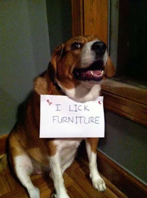''Dog Shaming Photos'' I Lick Furniture