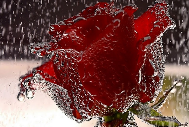 Awesome Rose Day HD Wallpapers 2018
