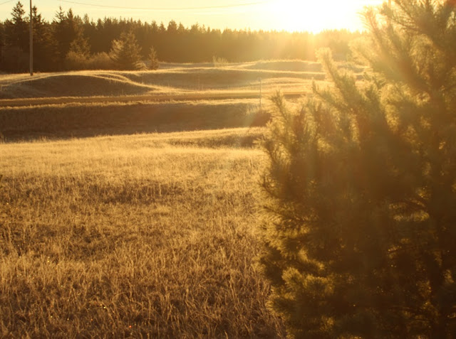 Sun shining on frost covered grass and trees