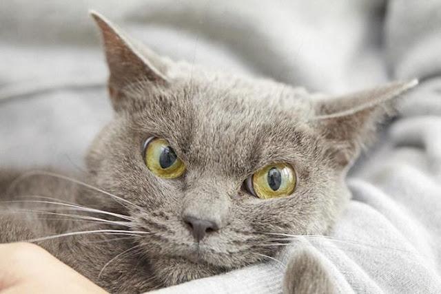 """Chú mèo với khuôn mặt không cảm xúc """"nhìn là thấy ghét"""""""