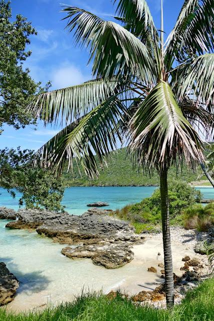 Palmen, Lord Howe, Island, Insel, Australien, Trauminsel, Traumstrand, Strand