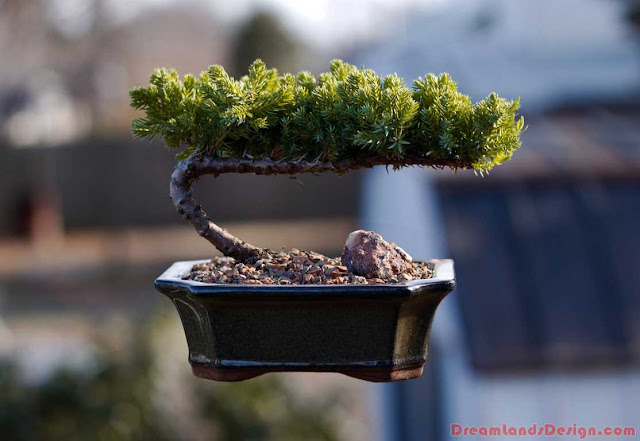 Essential Tools for Growing Bonsai Trees