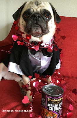 Liam the pug dressed up for valentines day