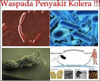Image result for penyebab penyakit kolera