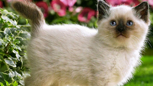 Wallpapers Cats