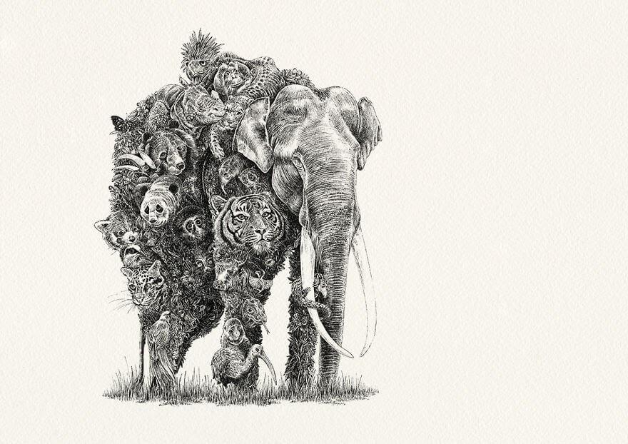 01-Asian-Elephant-Asia-Nathan-Ferlazzo-www-designstack-co