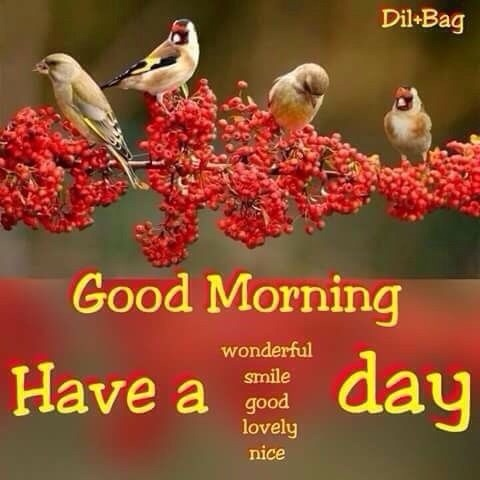 Nature Beautiful Flowers Good Morning