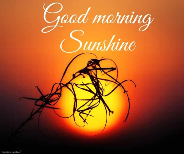 adorable good morning sunshine picture