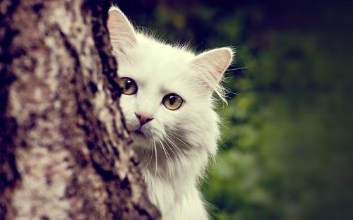 Cute Cat HD Photos