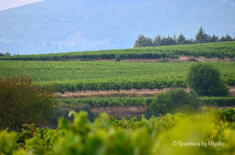 Vineyard's Landscape in La Rioja, Sierra de Cantabria 北スペイン リオハのワイン街道の風景
