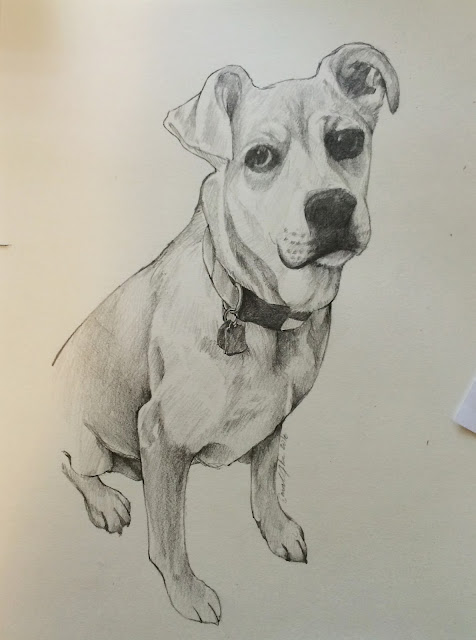 molly-the-dog, dog-sketch