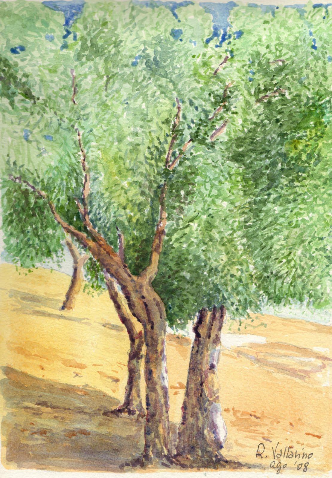 Disegno albero di ulivo for Albero ulivo vettoriale