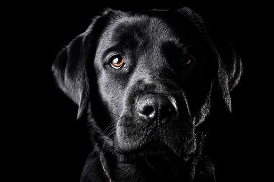 Dog Training Tips: 50 Names For Black