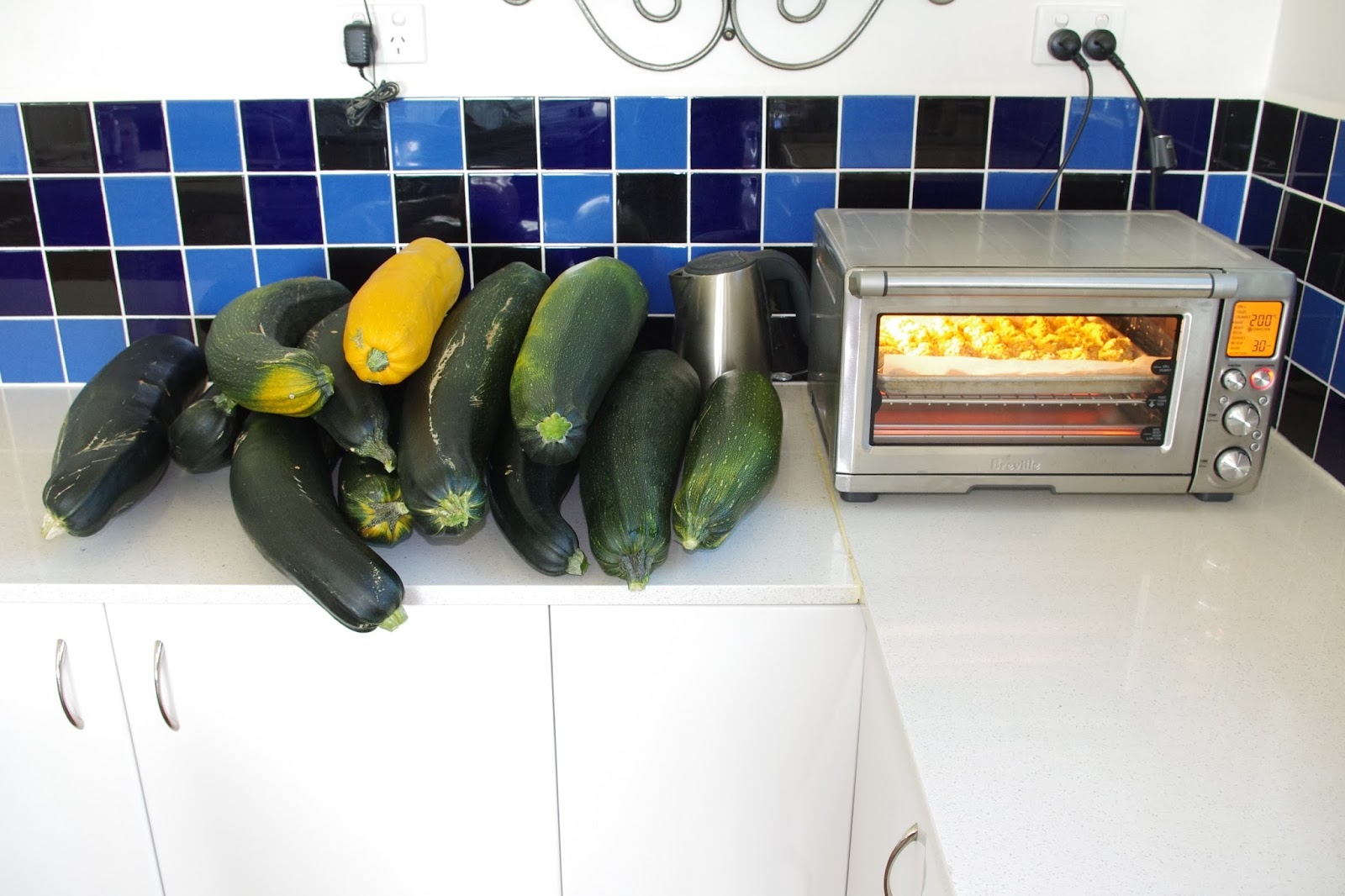 Twelve monster zucchinis