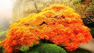 الحديقة اليابانية المذهلة أمريكا japanesegarden9.jpg