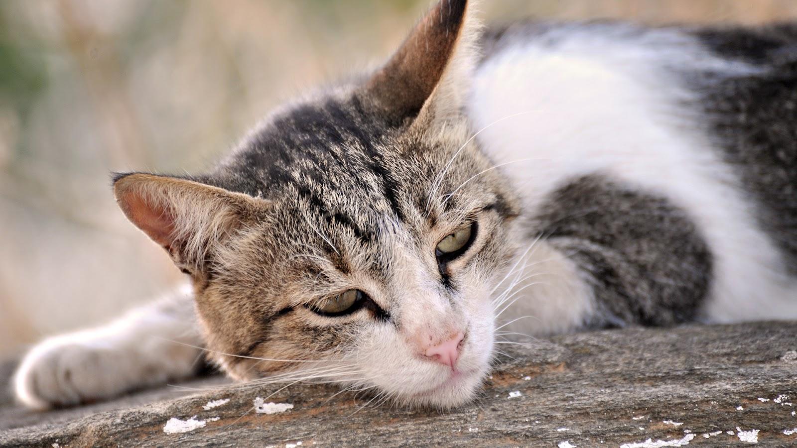 gato - photo #10
