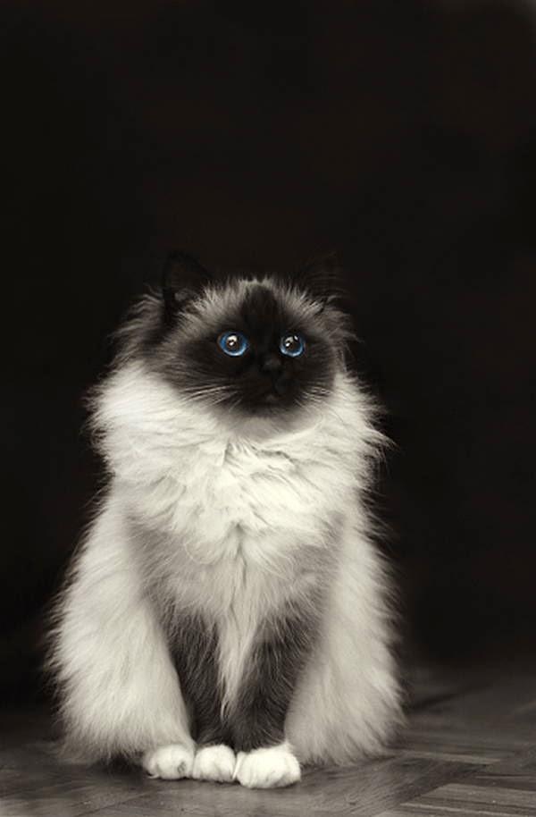 Funny cats - part 128 (40 pics + 10 gifs), funny cat picture, cat pics