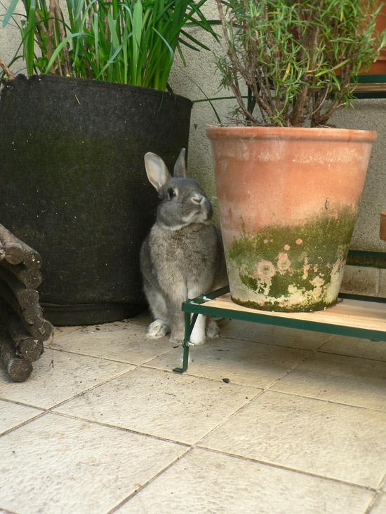 La dure vie du lapin urbain mardi sur le balcon for Enlever la mousse sur les murs