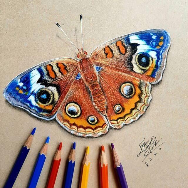 13-Bele-Butterfly-Drawing-www-designstack-co