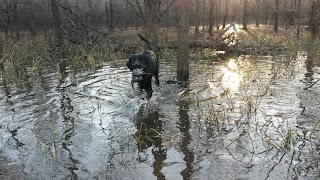 North Texas Duck Hunting|North Texas Dog Trainers