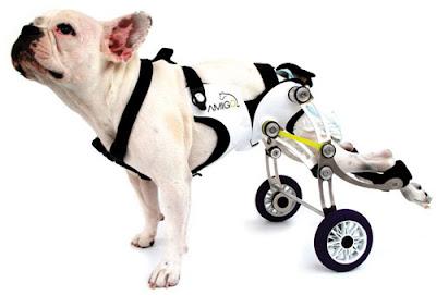 cães especiais cadeira de rodas