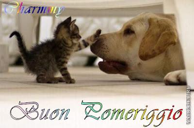 Foto Divertenti Di Cani E Gatti