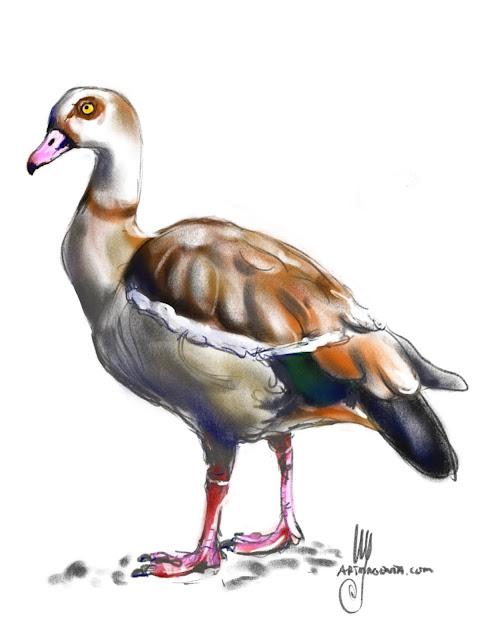 Egyptian goose Bird painting by Ulf Artmagenta