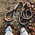 Αυτοκτονία ΣΟΚ στον Αμυγδαλεώνα - Κρεμάστηκε σε ένα δέντρο κτηνοτρόφος από την περιοχή