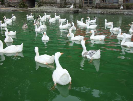 नैनीताल के झील