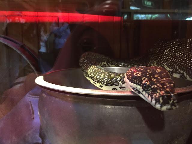 Taronga Zoo - Snake