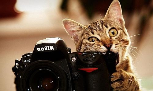 Cute Cat Image, Wallpaper, Picture, Photo