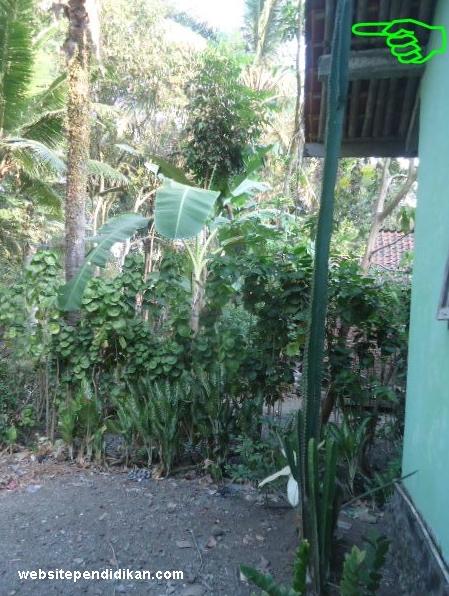 Ciri Khusus Kaktus dan Fungsinya
