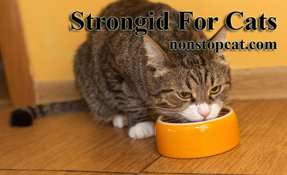Strongid For Cats