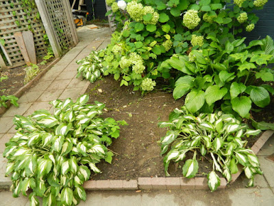 Leslieville Toronto Front Garden Cleanup After by Paul Jung Gardening Services--a Toronto Gardening Company