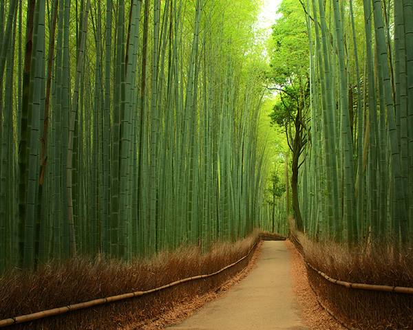 Bamboo Path in Kyoto