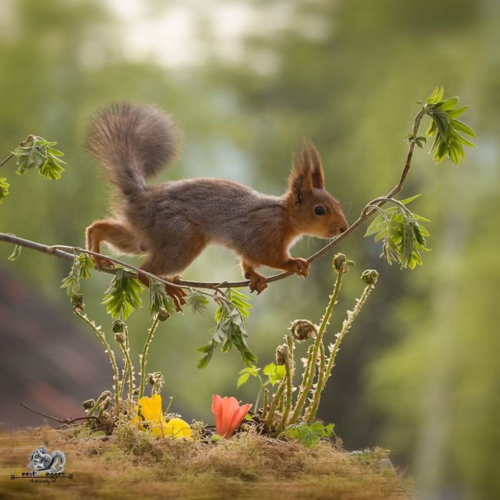 Photographer Captured Squirrels Every Day For Six Years And Here Are The Incredible Results