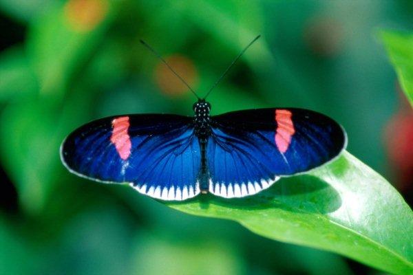 Điềm báo bướm trắng, bướm đen, bướm nâu bay vào nhà là xấu?