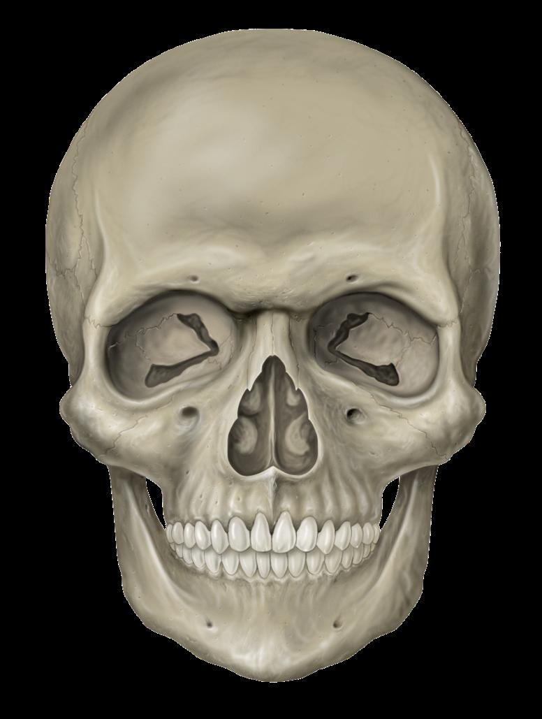 Gambar tengkorak lengkap gambar foto - Skull 4k images ...