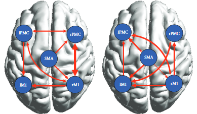図:運動イメージ時の皮質結合性変化