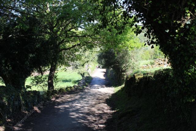 camino-de-santiago-frances-peregrinos-camino-barbadelo-a-mercadoiro
