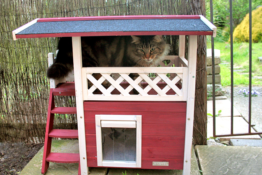 Make a Catnip Toy for Charity 01 - My cat in his swedish lodge cat house